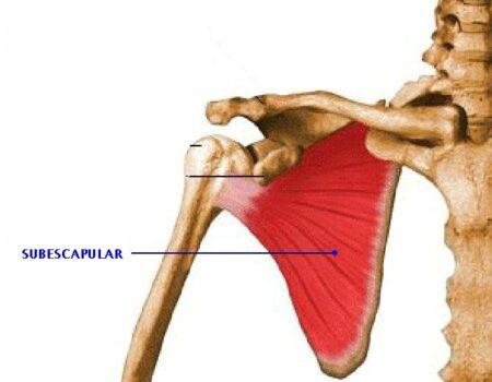 Músculo subescapular