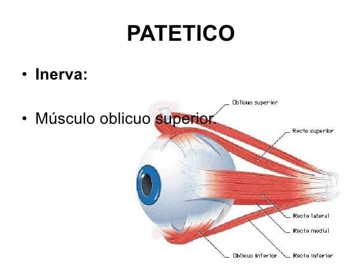 nervio patetico