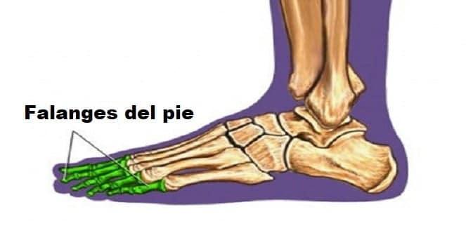 Falanges del pie
