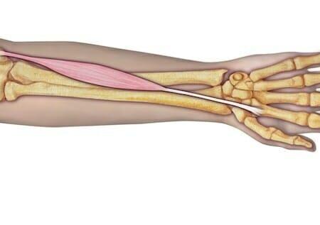 flexor radial del carpo