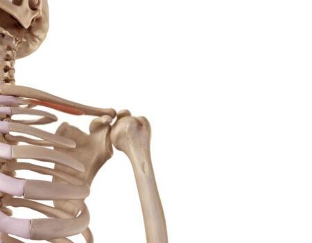 músculo subclavio