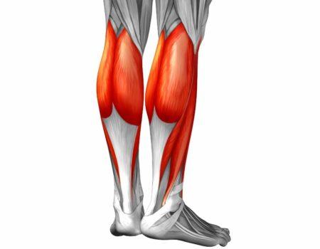 músculo gastrocnemio