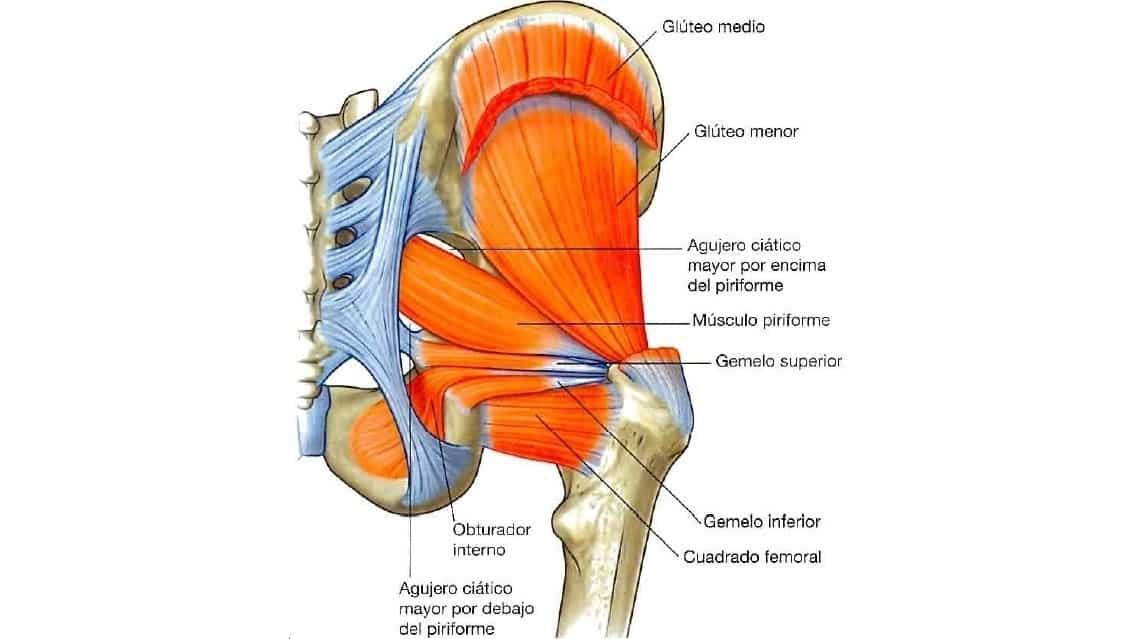 músculo gemelo inferior