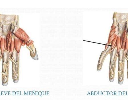 Músculos hipotenares