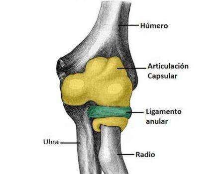 Articulación radioulnar proximal