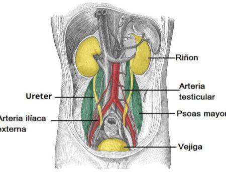Arteria ilíaca externa