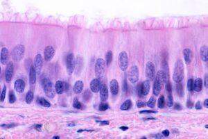 Epitelio respiratorio