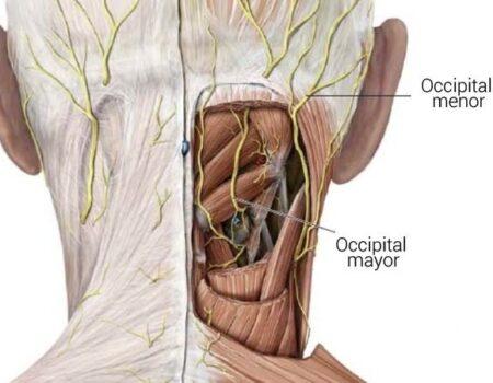 Nervio occipital mayor