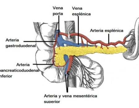 Arteria esplénica