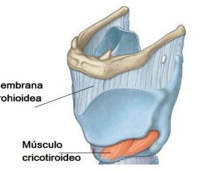 Músculo cricotiroideo