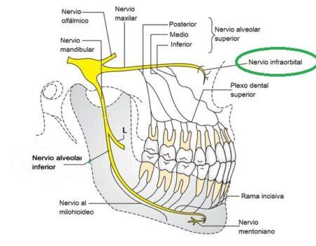 Nervio infraorbitario