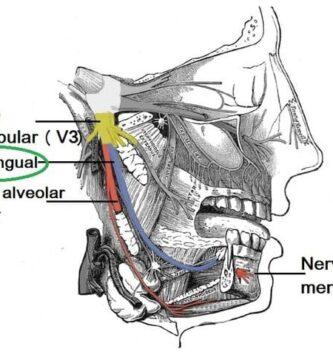 Nervio lingual