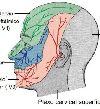 Nervio maxilar