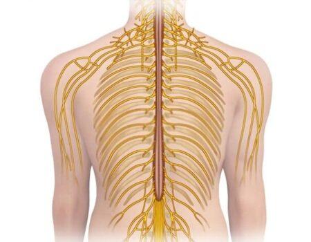 Nervios intercostales