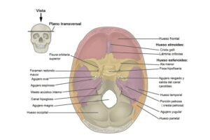 Agujeros y fisuras del cráneo