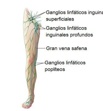 Drenaje linfático de la extremidad inferior