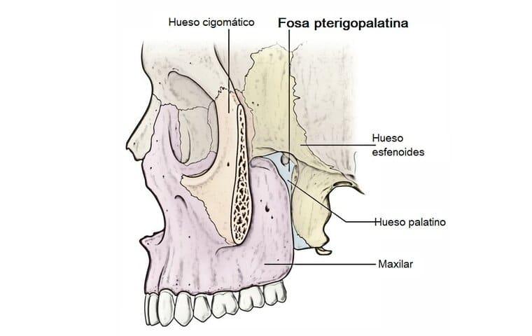 Fosa pterigopalatina