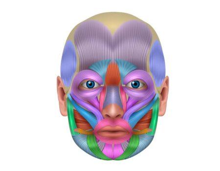 Músculos de la expresión facial