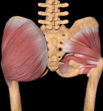 Músculos de la región glútea