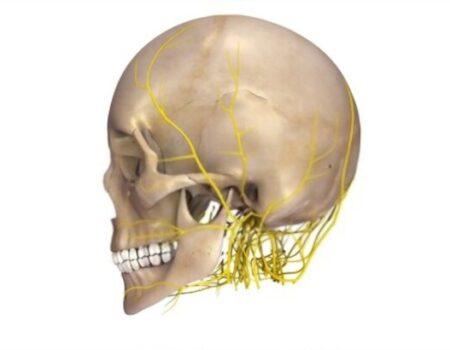 Nervios de la cabeza