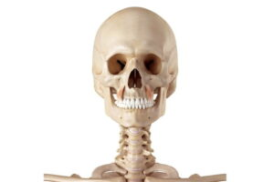 Músculo elevador del ángulo de la boca