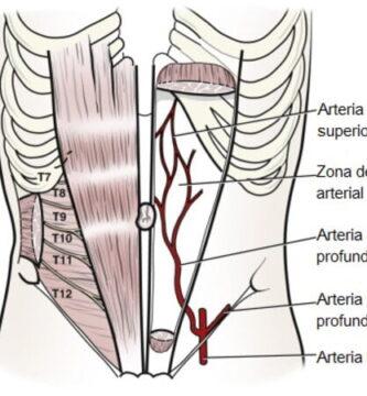 Arteria epigástrica superior