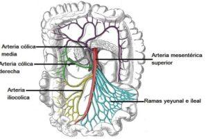 Arteria mesentérica superior