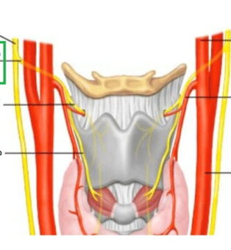 Nervio laríngeo superior