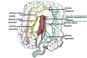 arteria mesentérica inferior