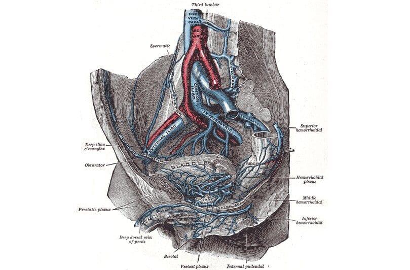 arteria iliolumbar